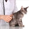 Ветеринарные клиники в Каратобе
